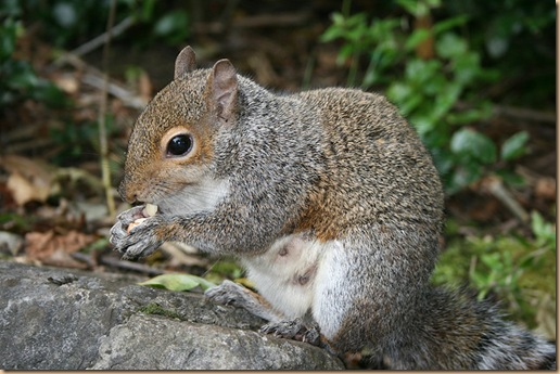 squirrelBinaryApe